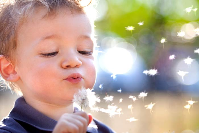 Toddler Blowing On Dandelion
